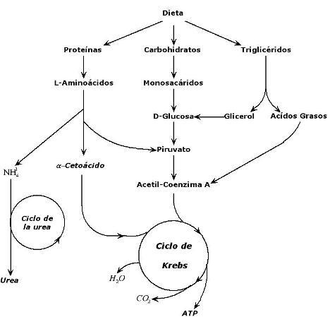 alimentos parael acido urico medicina natural para la gota ciatica mejillones para acido urico